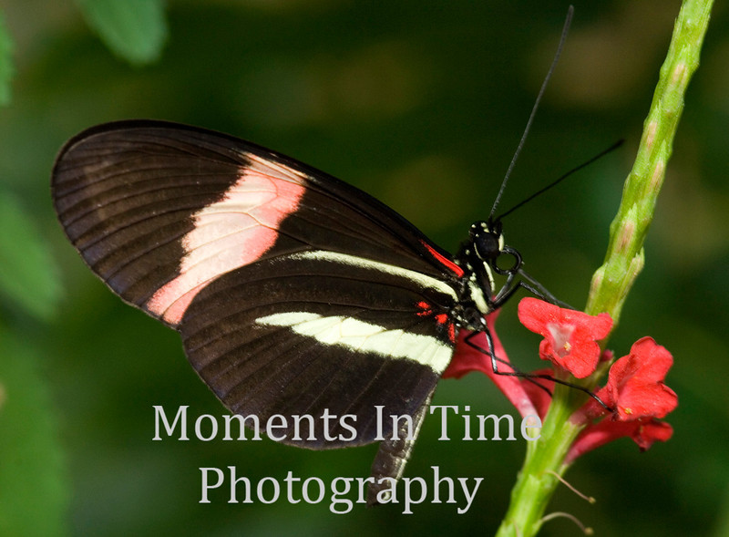 Butterfly profiled