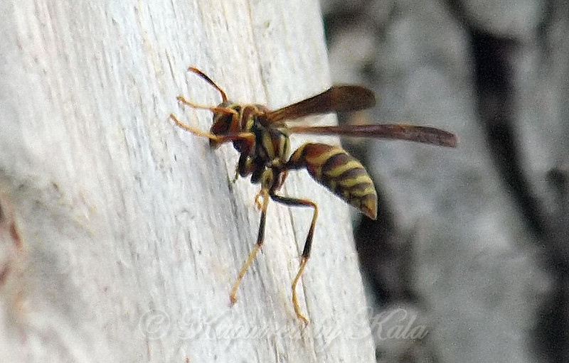 Paper Wasps Took It Over