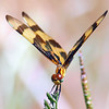 Halloween Pennant Face Shot