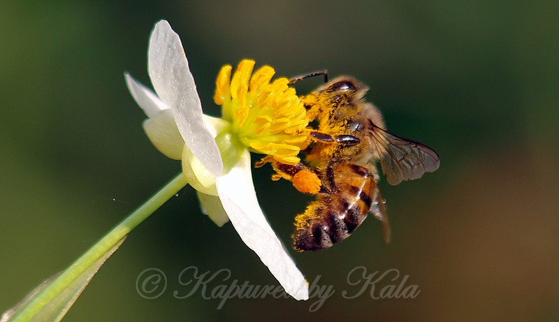 Pollinator Favorite