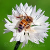 White Pollen View 2