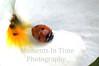 Ladybug close white