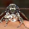 Mafia Moth