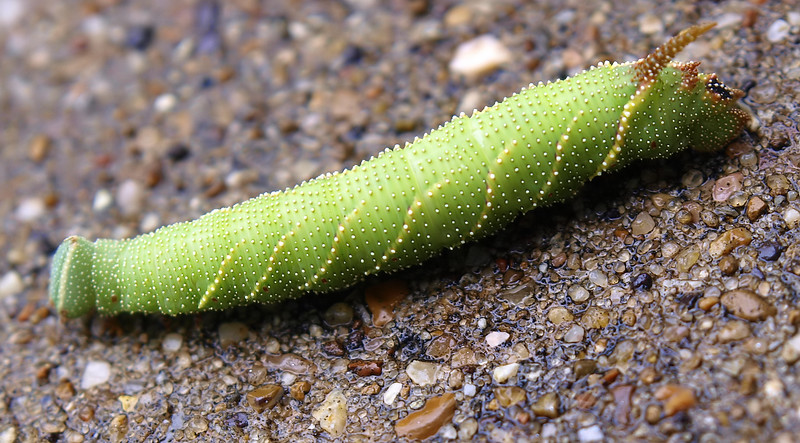 Cool Looking Caterpillar