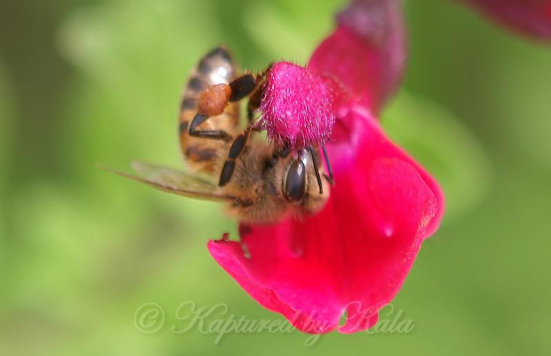 Fuzzy Bee, Fuzzy Flower