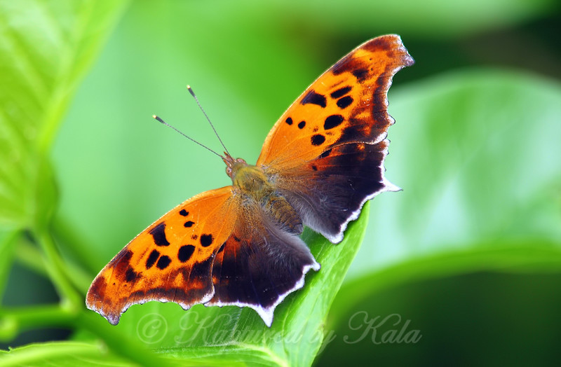Bright Butterfly On New Spring Growth