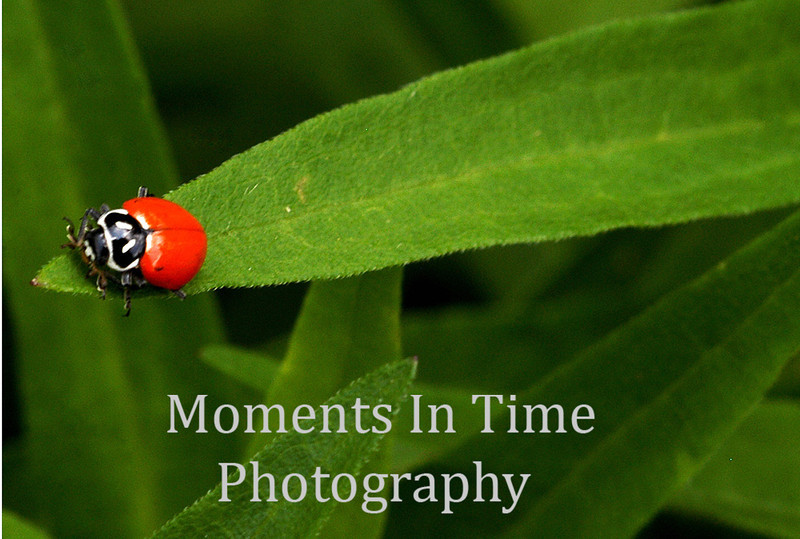 Ladybug end of the line
