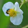 Green Sweat Bee View 3