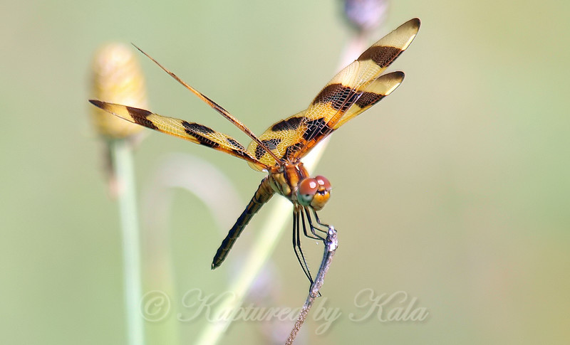 Halloween Pennant View 1