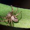 New Yard Spider