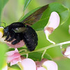 Win Win For Bees & Trees