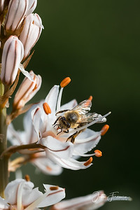 Honeybee, Andalucia
