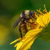 Nectar Madness