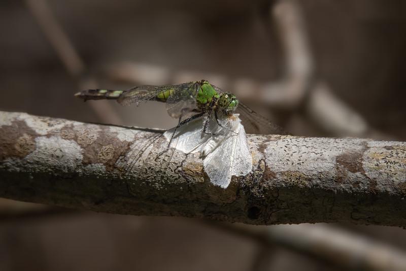 A Moth's Demise