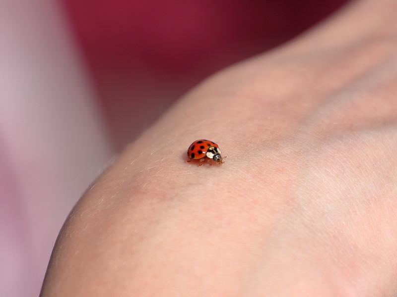 Bug Report