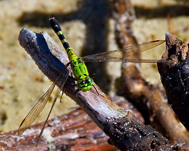 Dragon Fly Green 5