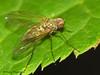 Snipe Fly, Devonian Botanic Garden, Devon, Alberta