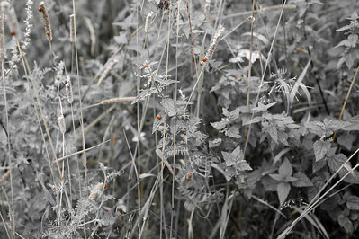 20090813as10-02-25 coccinella septempunctata, syvprikket marihøne