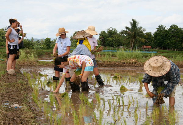 Rice planting in Pah Leurat