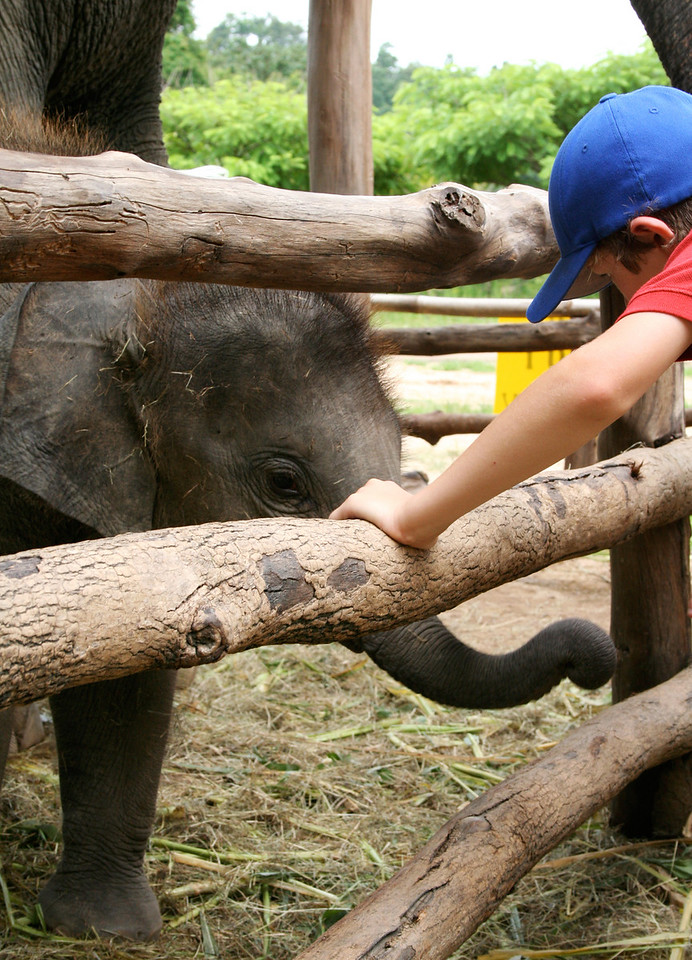Baby elephant at the Thai Elephant Conservation Center in Lampang