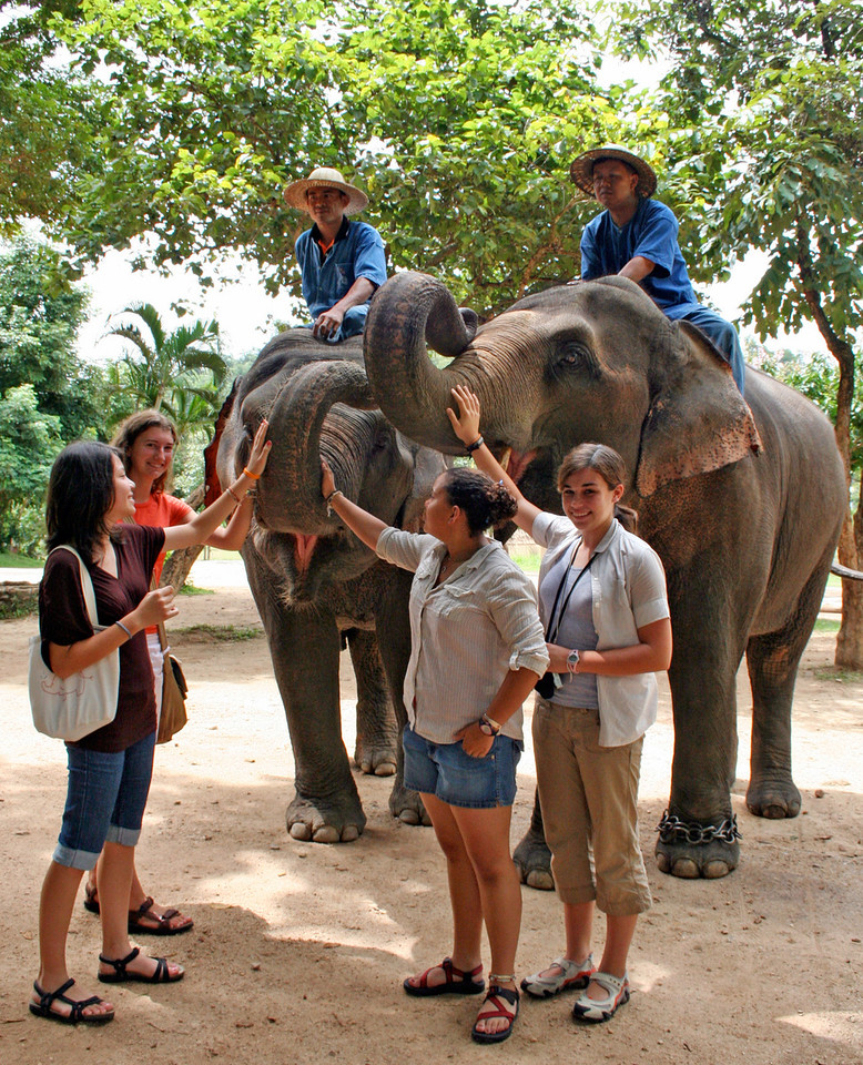 Elephants at the Thai Elephant Conservation Center in Lampang