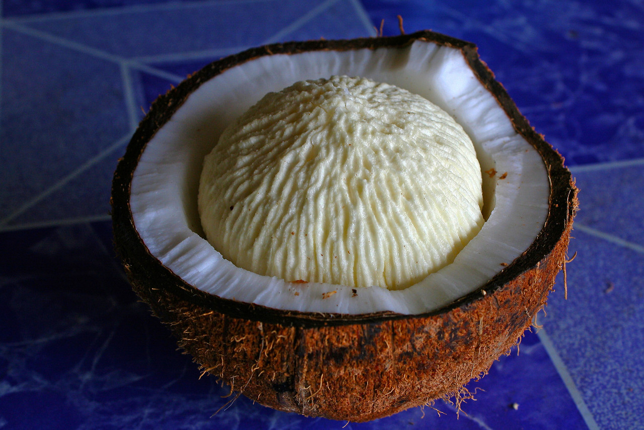 A coconut sprout - yum!