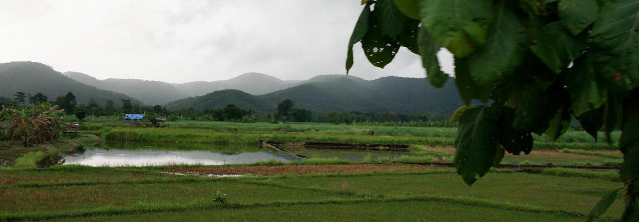 Rice_fields_across_river_summer_2007