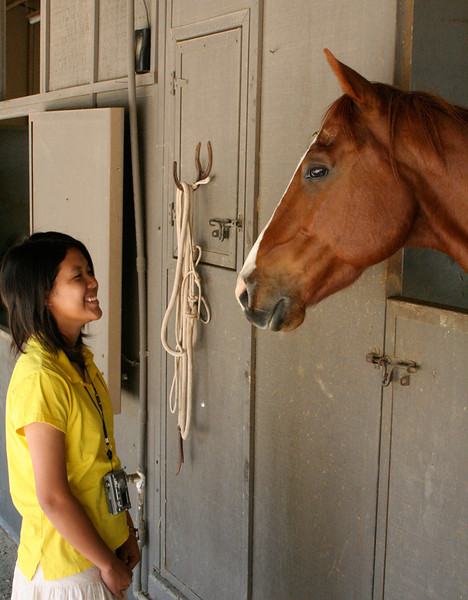 Thacher_horse
