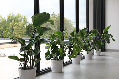 Light permeates the entire new Lower School building, nourishing plants and people alike.