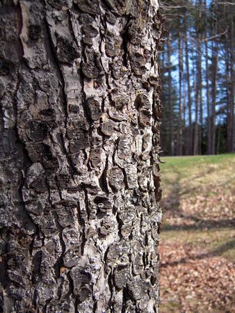 050309 - 3 trees