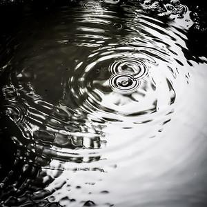 La pluie s'amuse à faire des ronds dans l'eau...