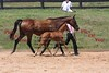 Alden's Illusion and 2008 foal :