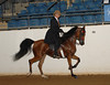 044 PB Country Pleasure Junior Horse :
