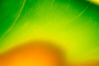 vorm_en_kleur_DSC2084c_JD_HDM0818ZO