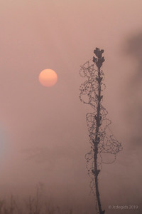 sunrise_JC01011+18412dc_JD_KWA0519LE