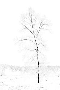 Sneeuw_19672c_JD_KWA0115WI
