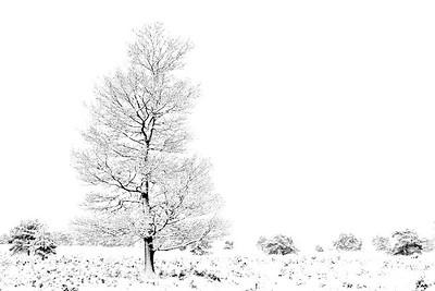 Sneeuw_19686b_JD_KWA0115WI