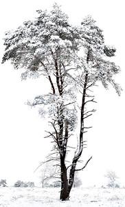 Sneeuw_Pan1_19797-01c_JD_KWA0115WI