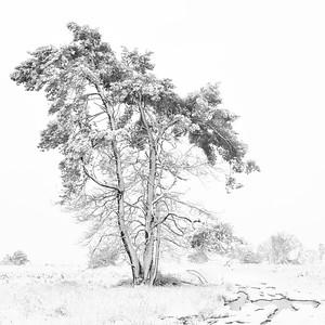 Sneeuw_19690b_JD_KWA0115WI