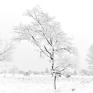 Sneeuw_19676c_JD_KWA0115WI