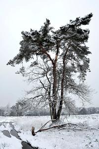 Sneeuw_19711c_JD_KWA0115WI