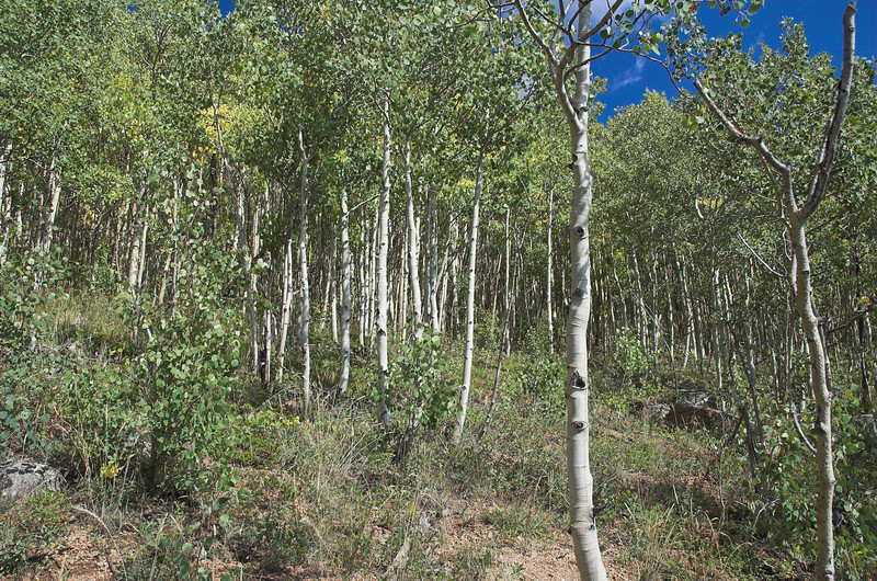 A zillion trees.