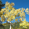 The first gorgeous aspen on the hike. The sky was amazing gorgeous blue.
