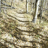 After going up the drainage the trail turns and heads up hill in a different direction.  This is where the aspen come in.