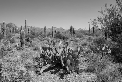 Arizona-Sonora Desert Museum in Tucson, Arizona.