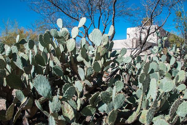Arizona-Sonora Desert Museum in Tucson, Arizona.