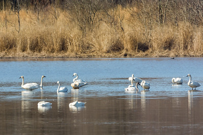 Shearness Pool  Bombay Hook National Wildlife Refuge  Smyrna, Delaware