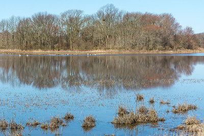 Shearness Pool  Bombay Hook National Wildlife Refuge  Smyrna, Delaware