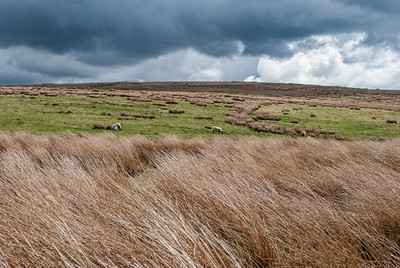 Pasture on the border of Scotland and England.