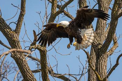 White Horse Eagle Nest  Lancaster, PA